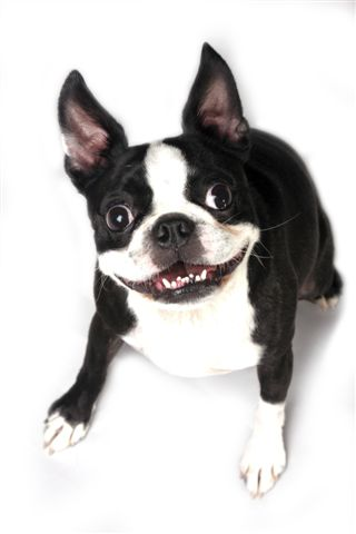 טיפולי שיניים לכלבים