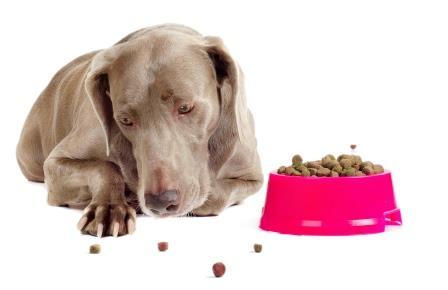 הפרעות אכילה אצל כלבים
