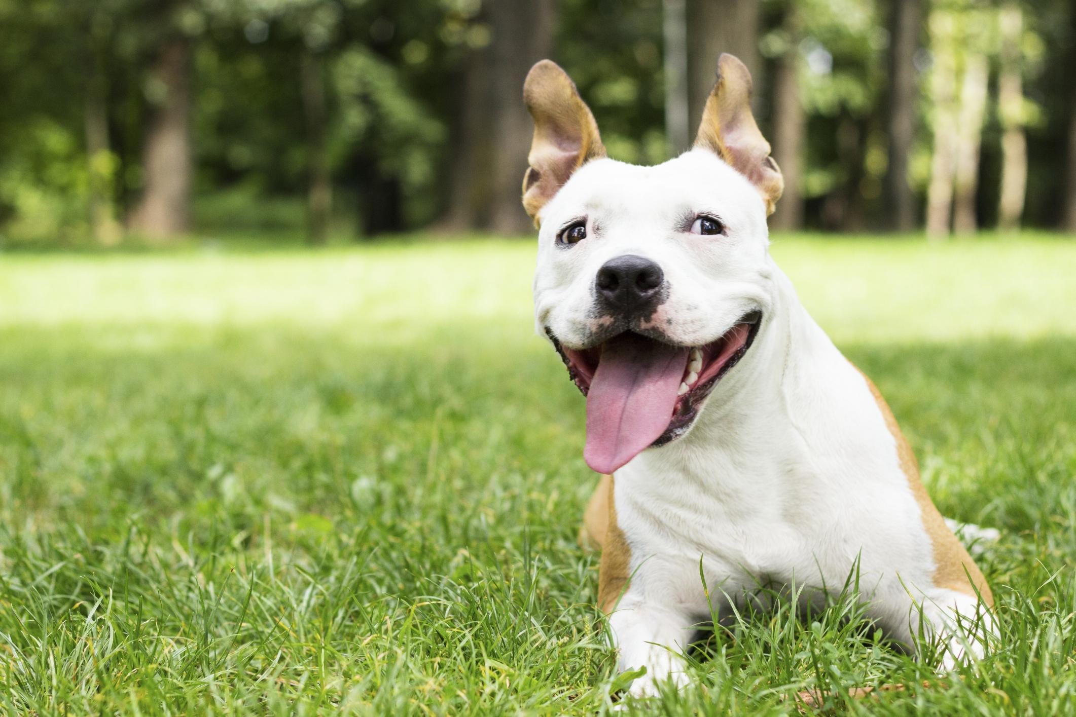 מה לעשות כשהכלב משתעל?