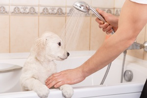 מקלחת לכלב